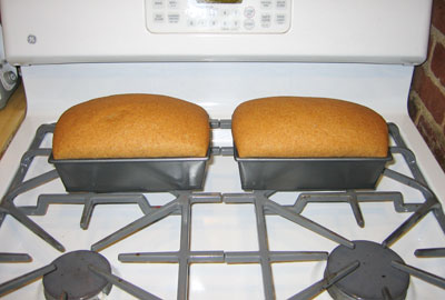 Whole Grain Whole Wheat Bread Two Loaves Healthy